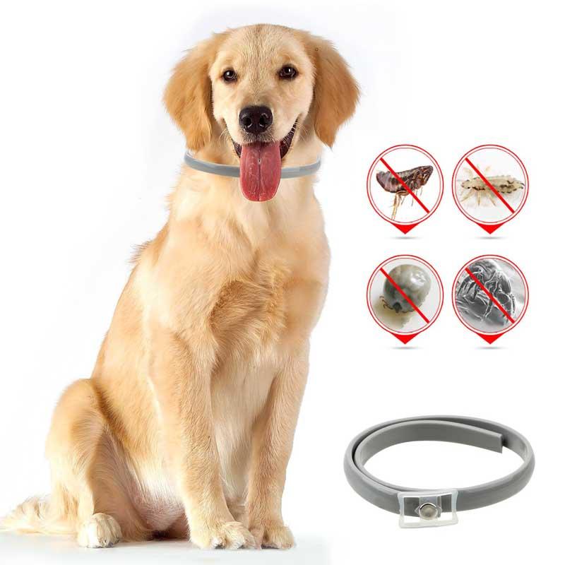 Perro con collar para eliminar pulgas en perros