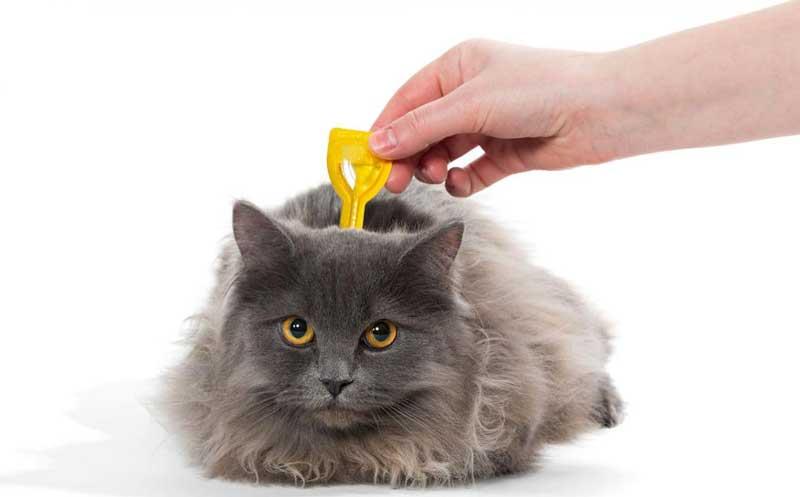 Eliminar pulgas en gatos
