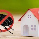 Foto de prohibido pulgas en casa
