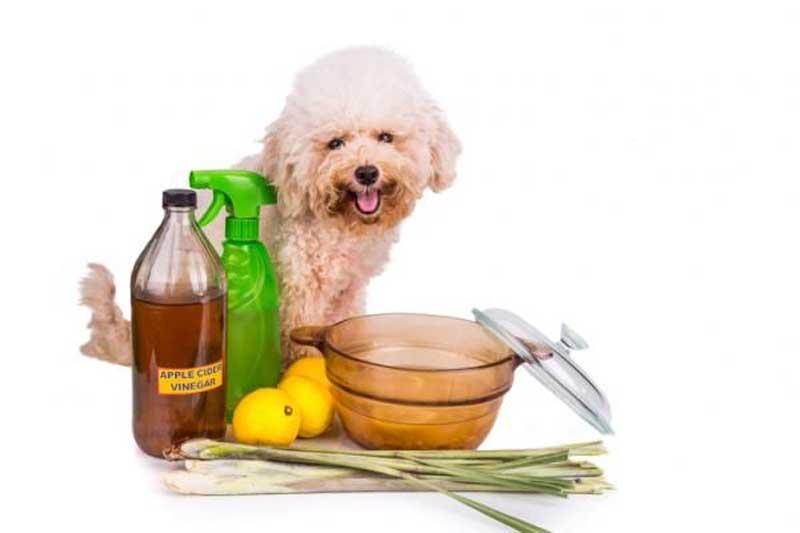Remedios caseros para eliminar pulgas en perros